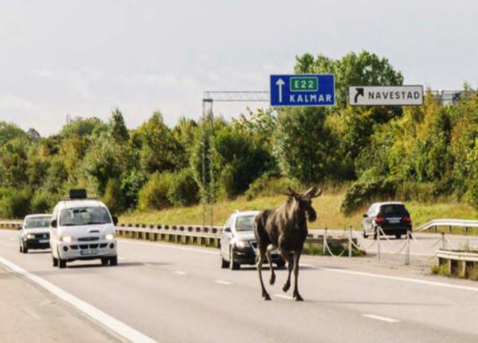 Analys av infrastrukturens permeabilitet för klövdjur – Slutrapport