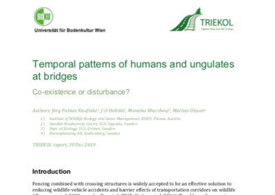 Temporal patterns of humans and ungulates at bridges