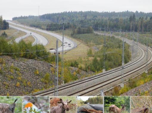 Vägar och järnvägar – barriärer i landskapet