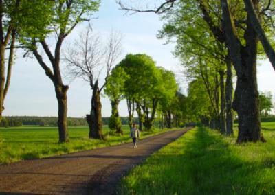 Värdefulla träd längs vägar och järnvägar