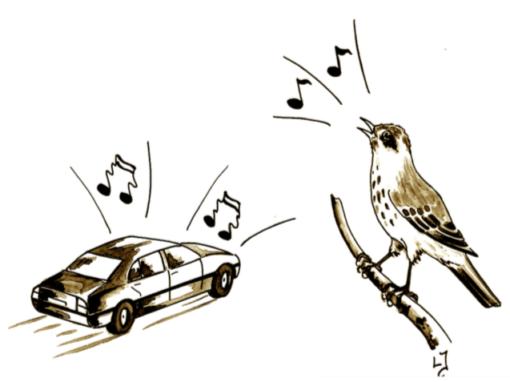 Trafikbuller i värdefulla naturmiljöer II – Slutrapport