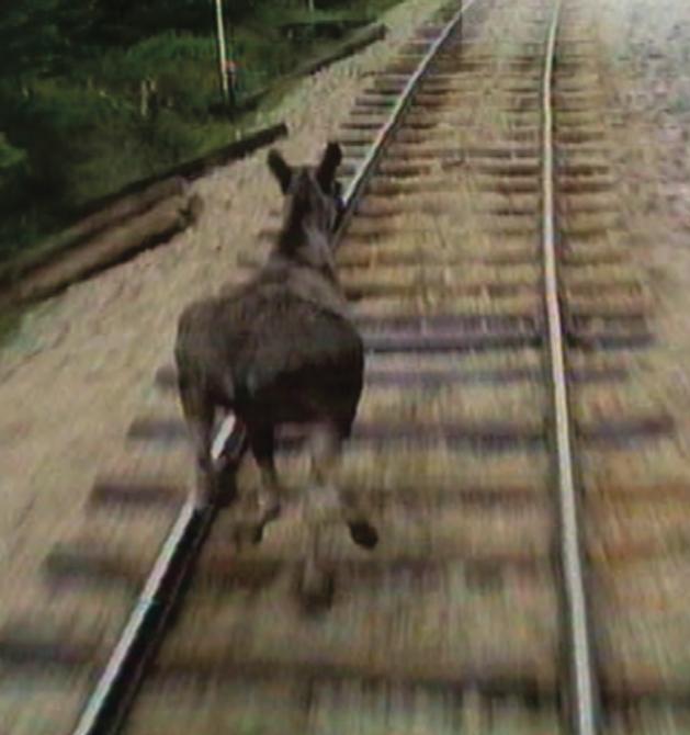 Klövviltolyckor på järnväg