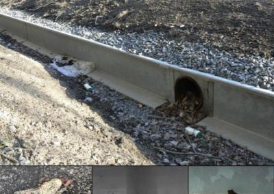 Uppföljning och utvärdering av groddjursåtgärder vid Skeppdalsström