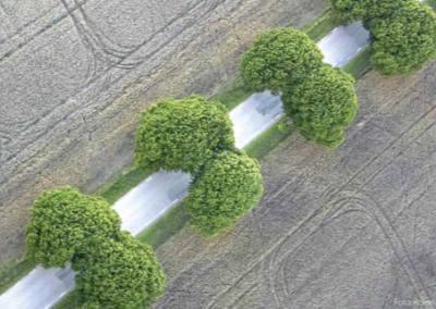 Vägarnas värdefulla träd